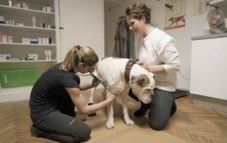Tierarztpraxis Nussdorf Lasertherapie