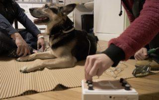 Tierarztpraxis Nussdorf Elektrotherapie