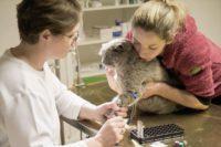 Tierarztpraxis Nussdorf Kater Lucky
