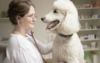 Tierarztpraxis Nussdorf Interne Medizin